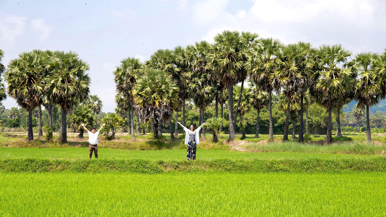 Check-in cánh đồng thốt nốt cực đẹp tại An Giang