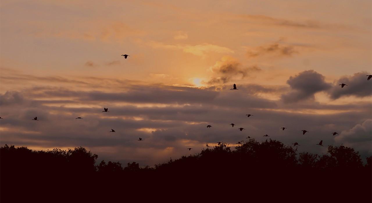 Ngắm cảnh chim cò vào hoàng hôn tại khu du lịch Mùa Xuân