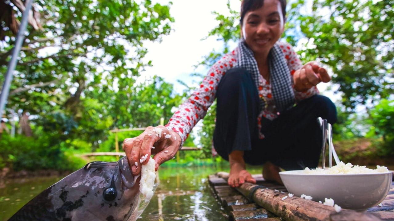 Đút cá ăn tại Cồn Sơn