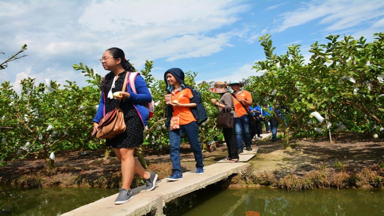 Du khách tham quan vườn ổi cô Điệp ở Tân Lộc