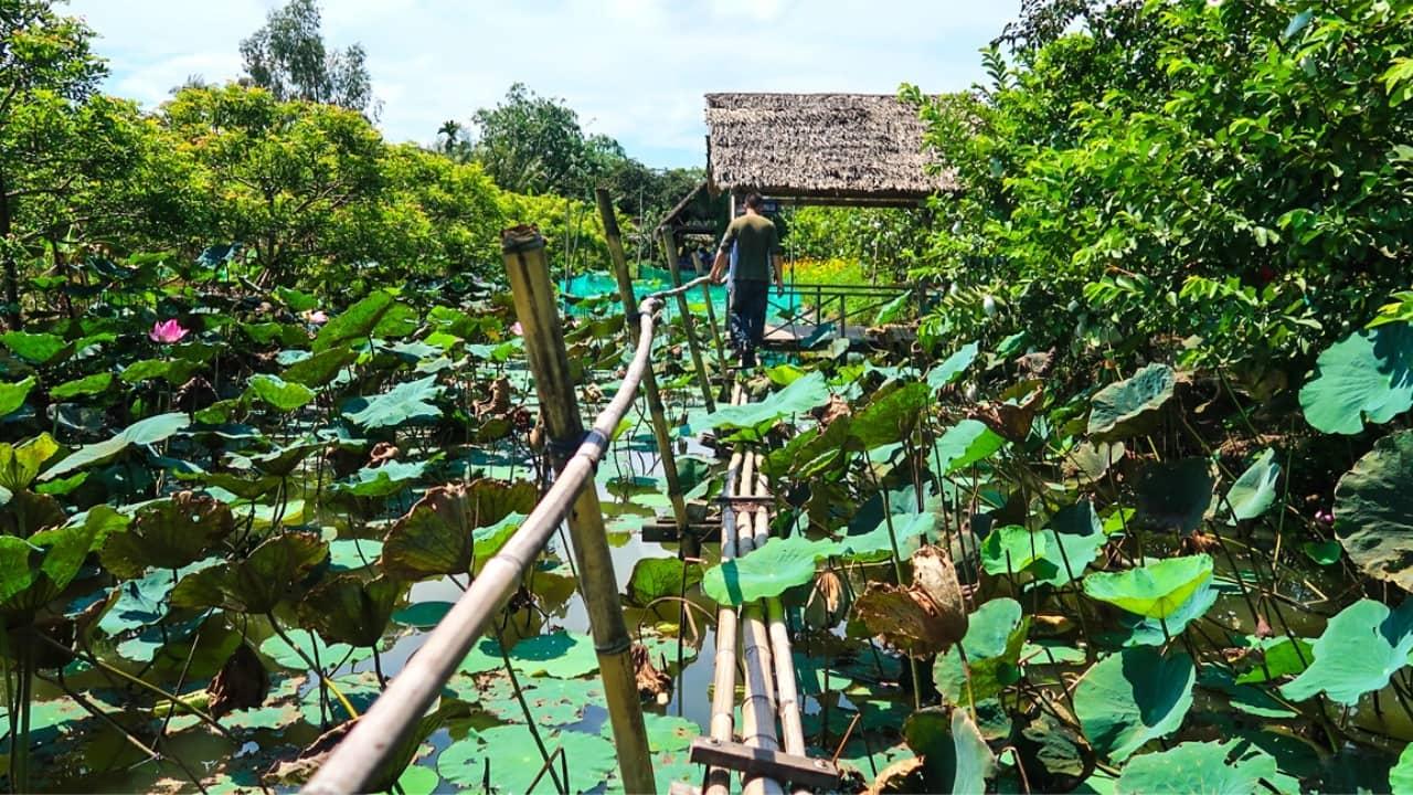 Hồ sen Cồn Sơn