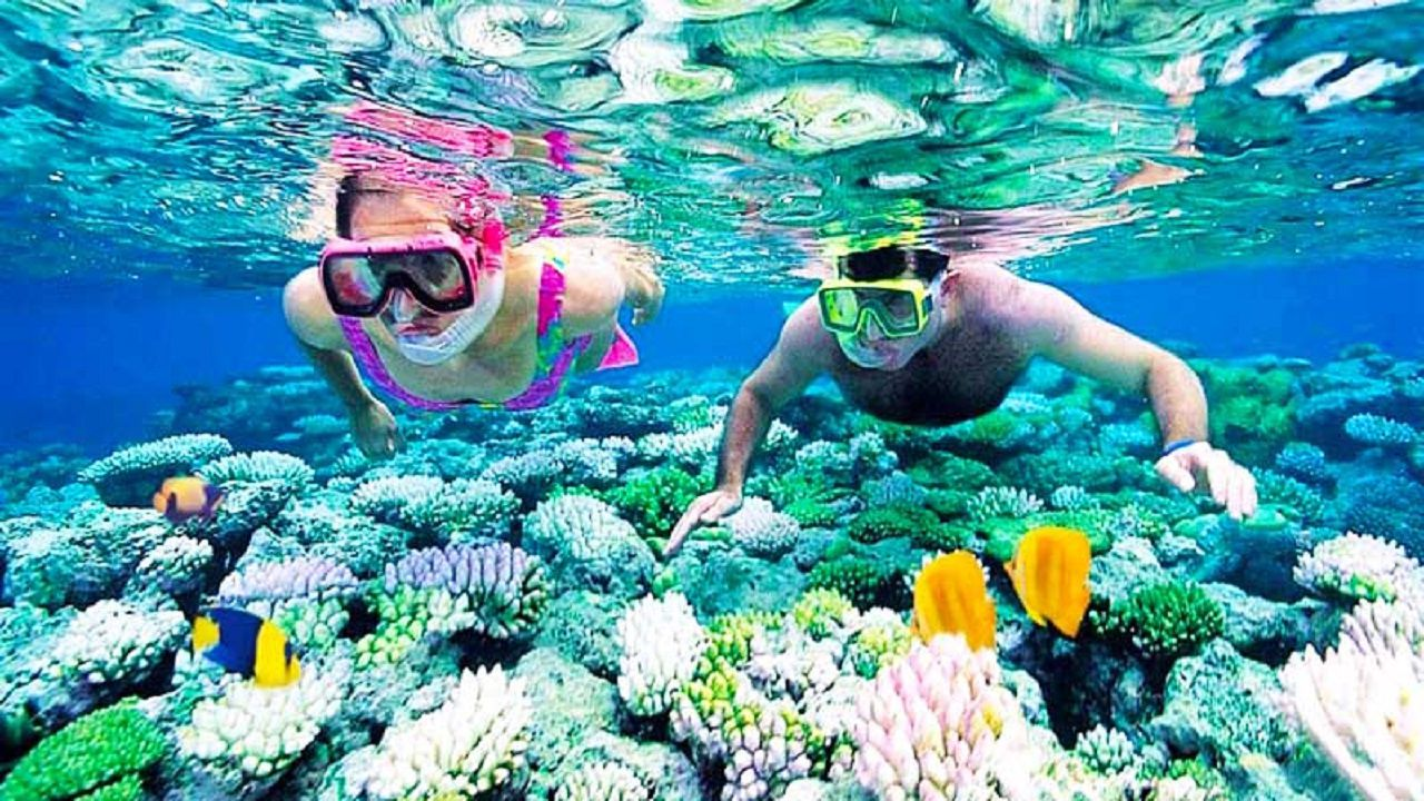 Lặng ngắm san hô đẹp rực rỡ