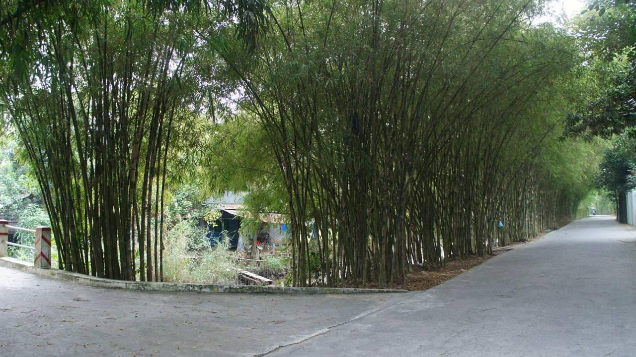 Lối vào vườn cò Bằng Lăng