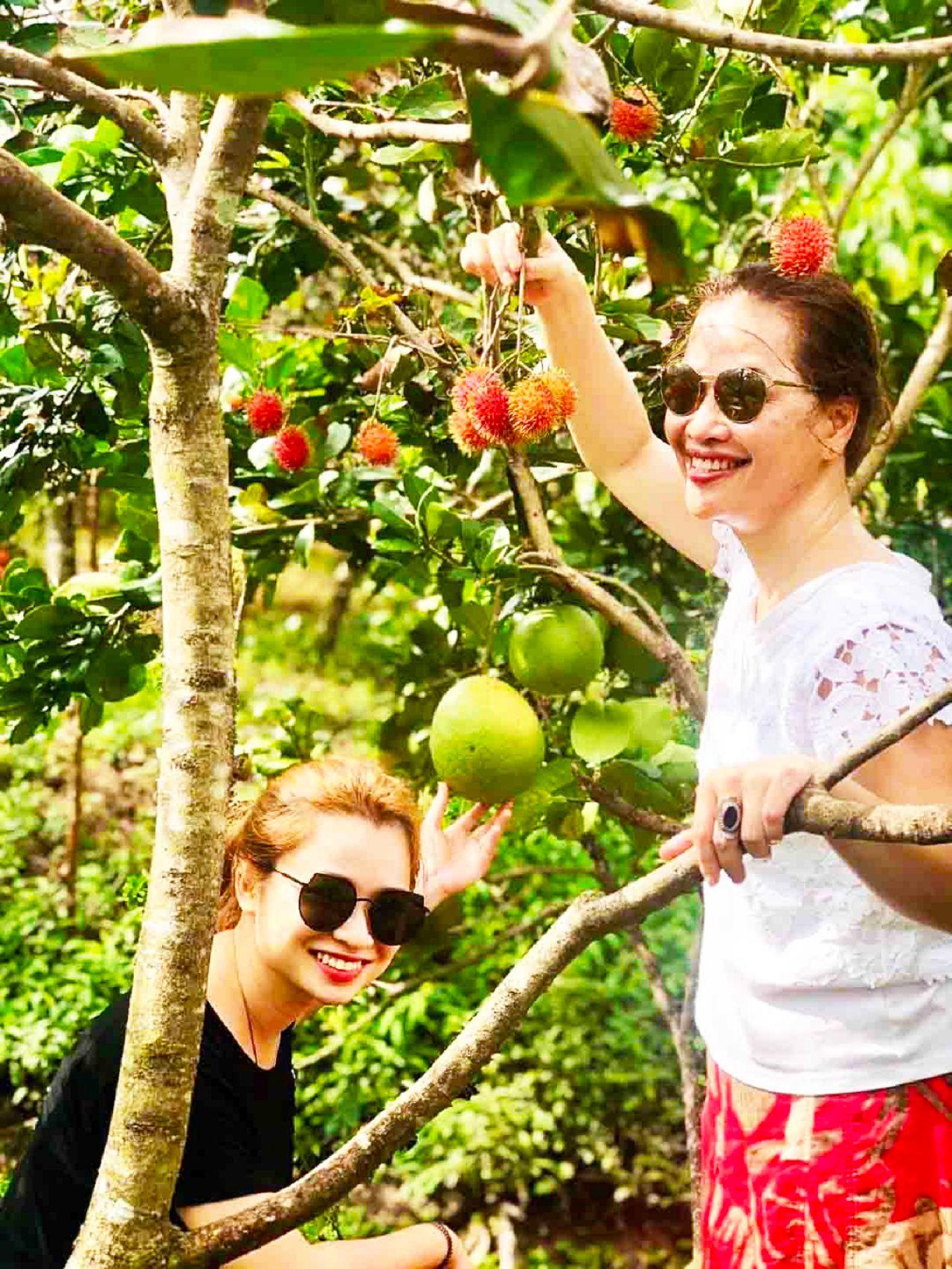 Tham quan vườn trái cây nhà vườn Út Trinh