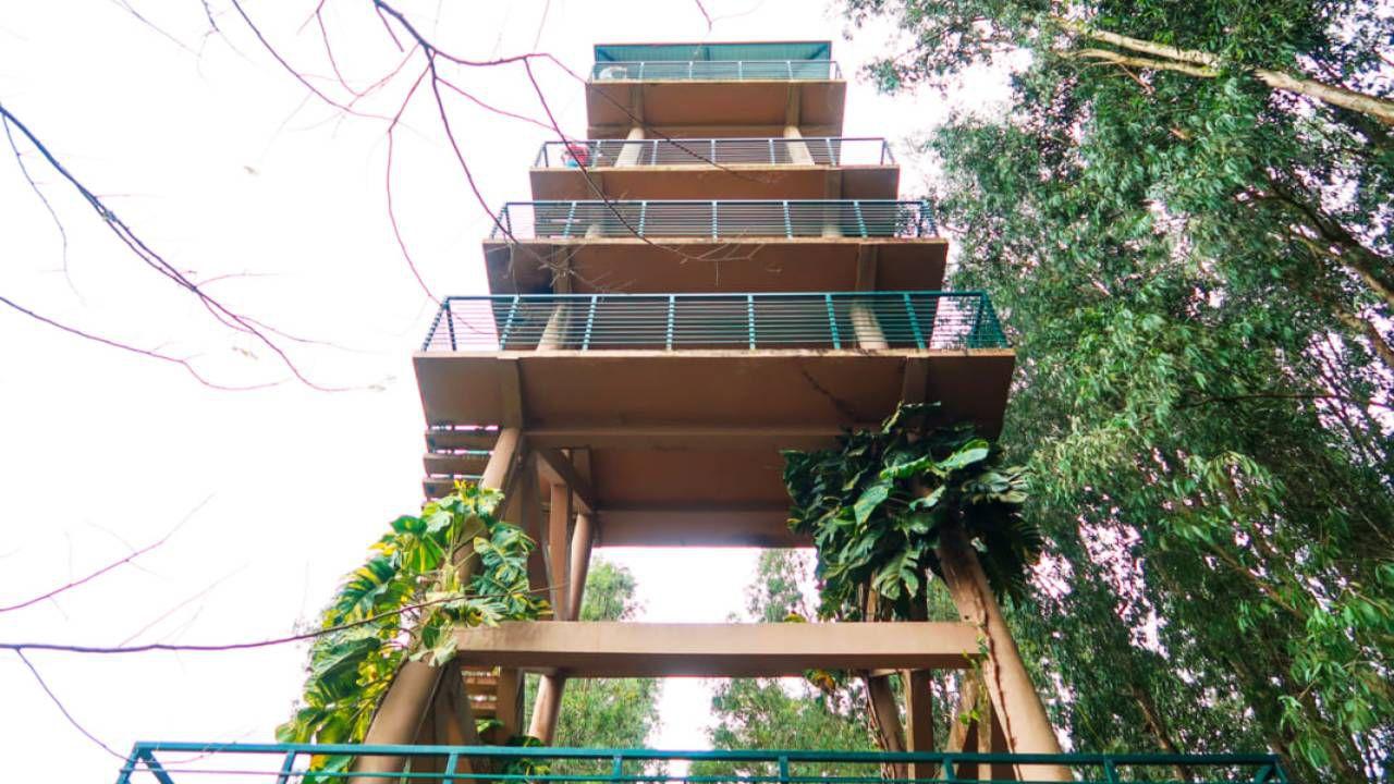 Tháp quan sát rừng tràm