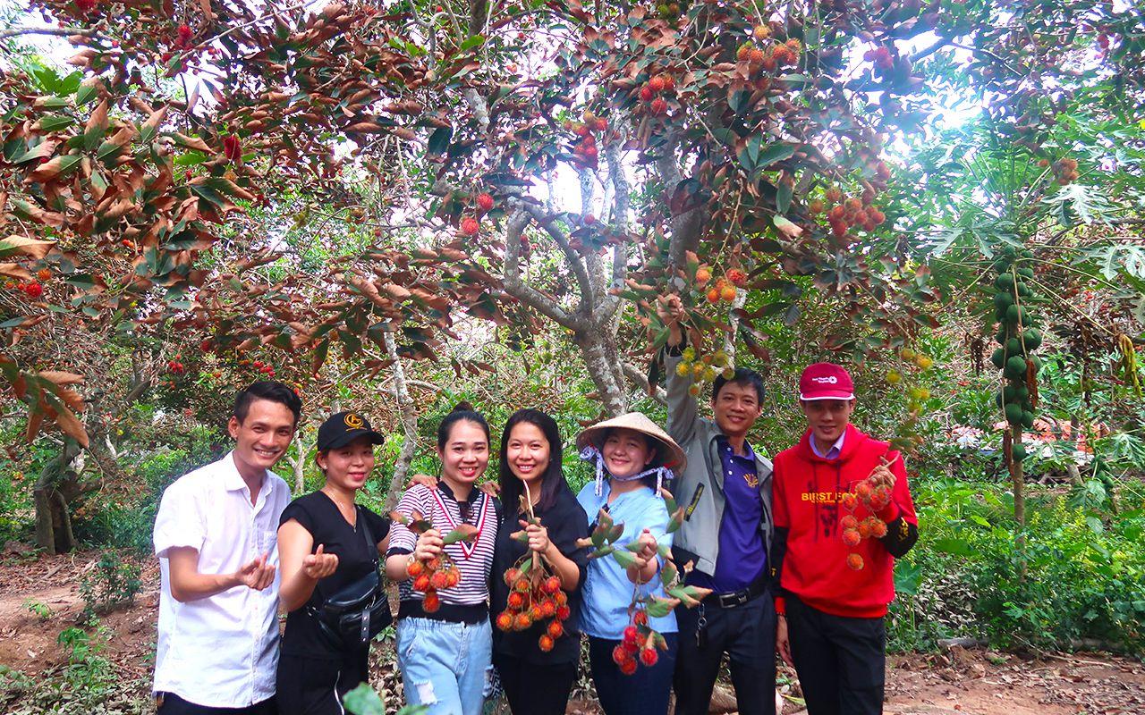 Tự do hái và thưởng thức trái cây tươi tại vườn