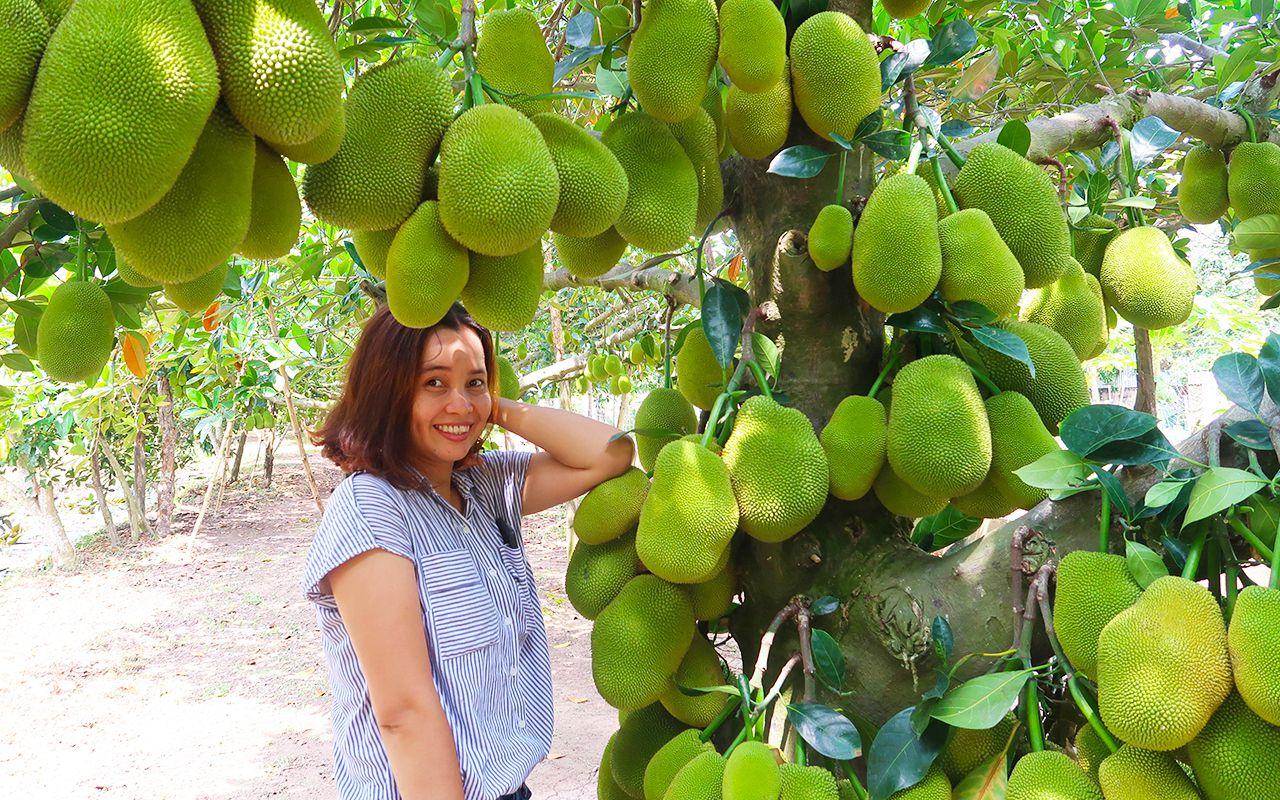 Chụp ảnh trong vườn trái cây trĩu quả