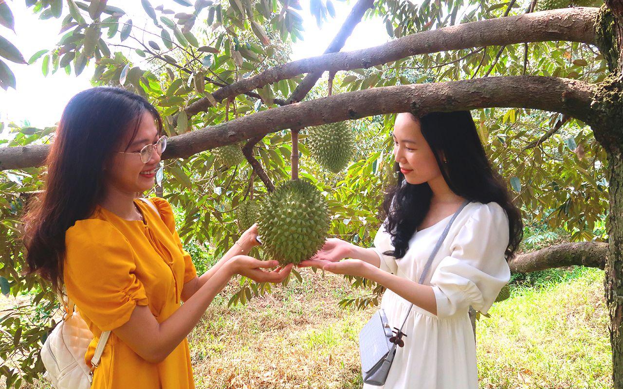 Vườn Sầu Riêng Tour Chợ Nổi Cái Răng Nửa Ngày