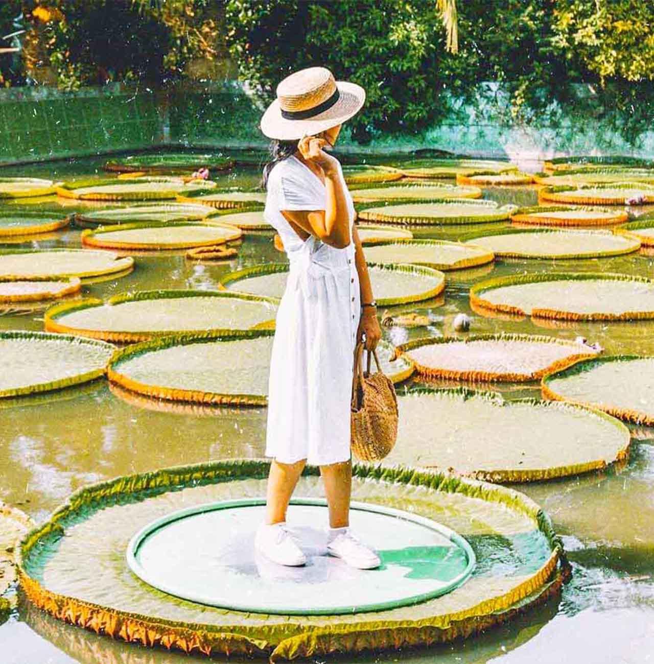 Tour chùa lá sen Đồng Tháp
