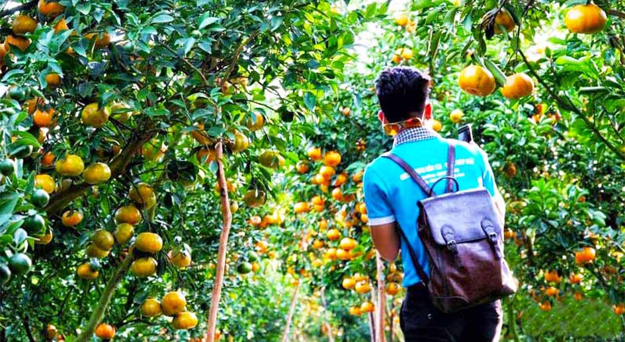 Tour chùa lá sen - Tham quan vườn quýt Hồng