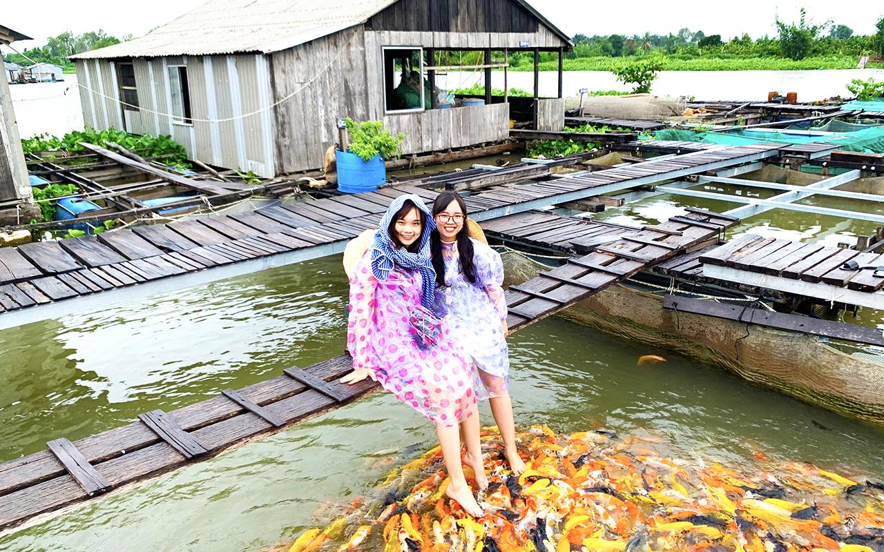 Check-in làng cá bè 7 Bon với cá Koi độc đáo - Tour Cồn Sơn 1 ngày