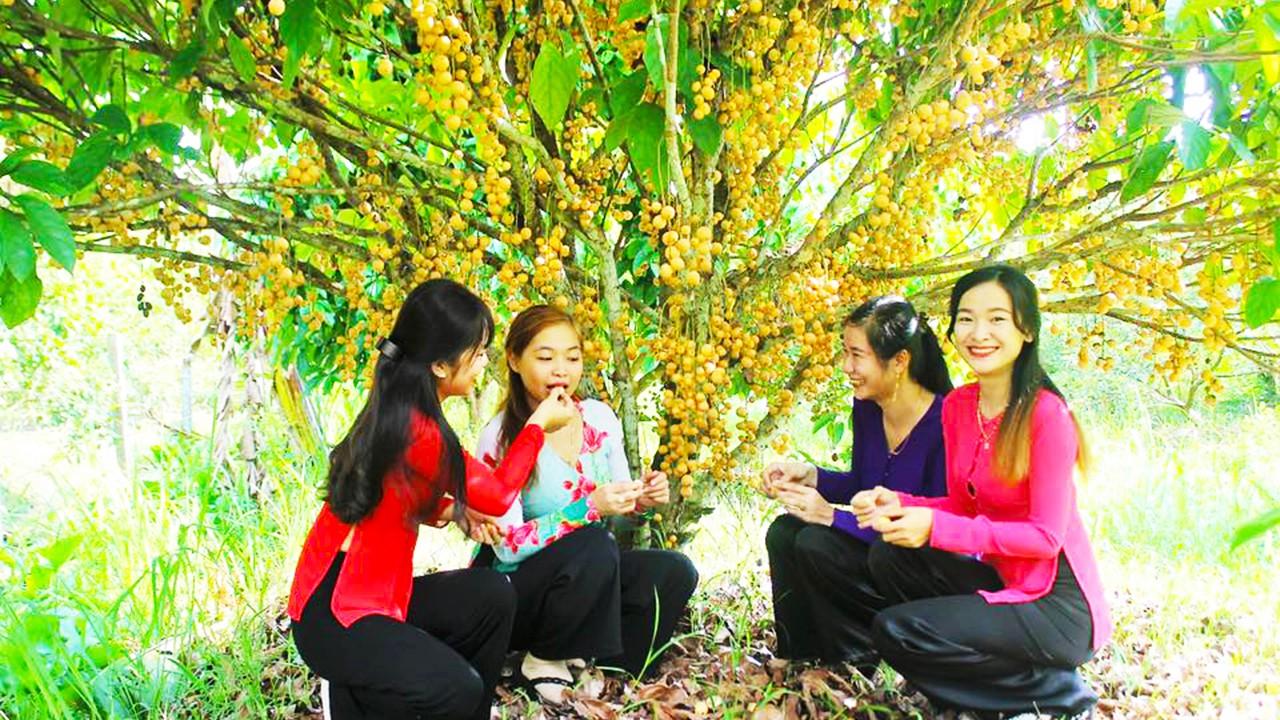 Vườn trái cây khu du lịch Mỹ Khánh