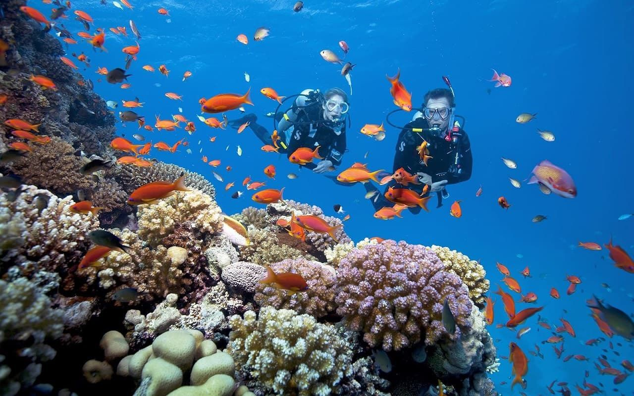 Tour lặn ngắm san hô ở Phú Quốc 1 ngày