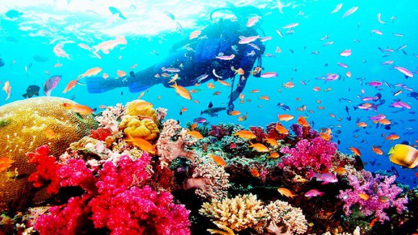 Tour lặn ngắm san hô Phú Quốc giá rẻ