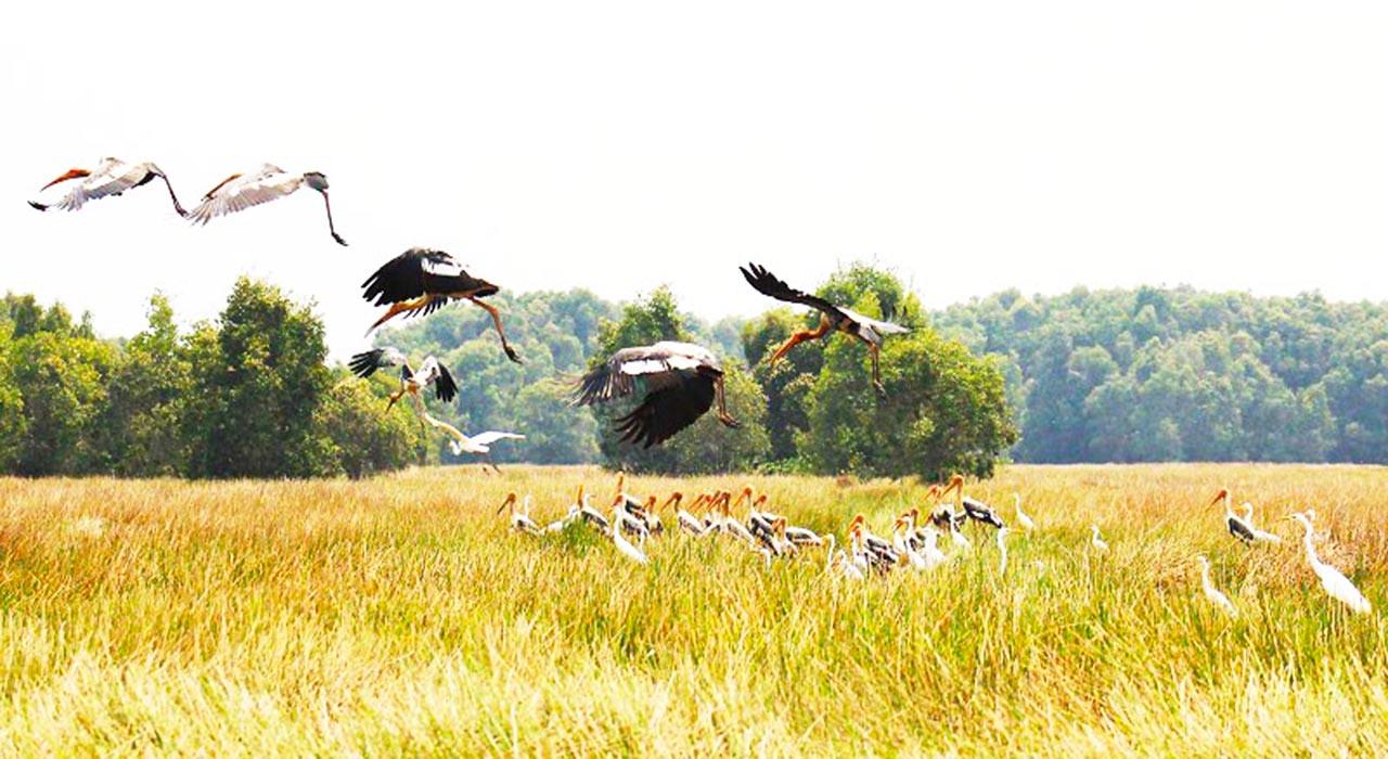 Nhiều chim cò quý hiếm tại Tràm Chim Đồng Tháp